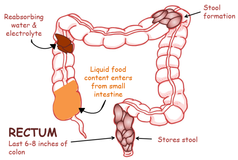 Colon and Rectum